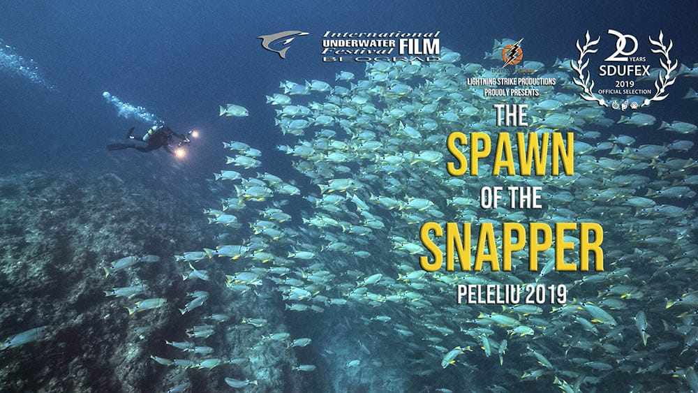 Spawning aggregation of Sailfin Snapper film poster