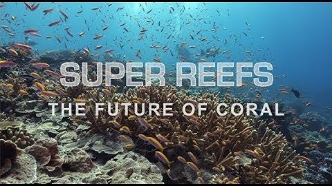 Super Reefs film poster