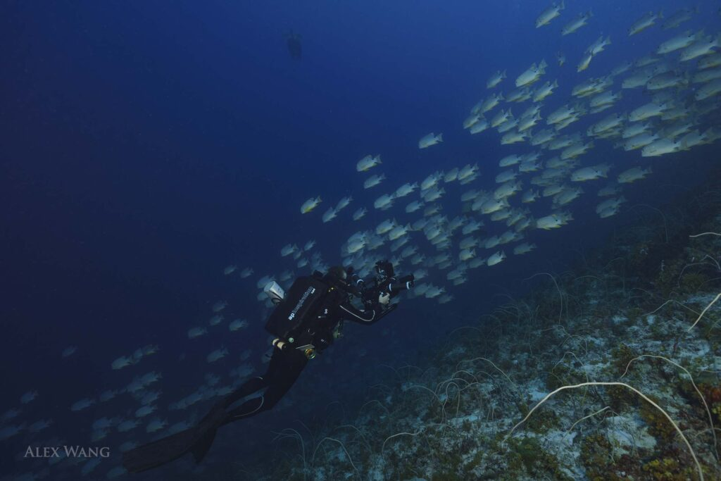 Underwater cameraman using a rebreather filming school of fish